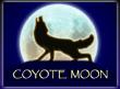 Coyote Moon wild