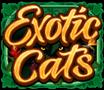 Exotic Cats wild