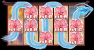 Sakura Dragon wild features