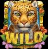 Rainforest Magic wild